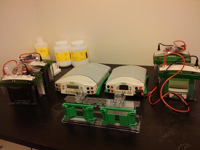 Equipment Biopsychology Laboratory Nebraska